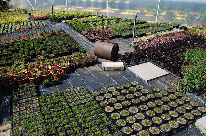 Plant world gardens and nursery for Garden information sites